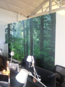 Nature scene photographic wallpaper installed in Portland, Oregon by Blue Sky PDX