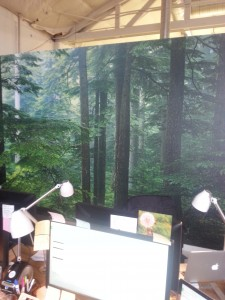 Forest scene photographic wallpaper installed in Portland, Oregon by Blue Sky PDX